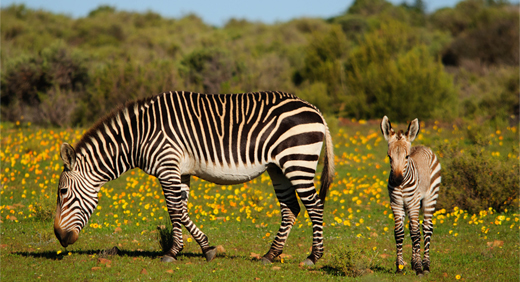 African Safari Honeymoon| Confetti.co.uk