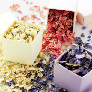 Spring freeze dried delphinium petals