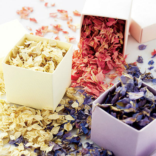 Delphinium petals | Confetti.co.uk