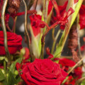 Red roses by Bloom Bloom