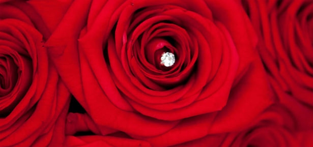 red rose close up by Bloom Bloom