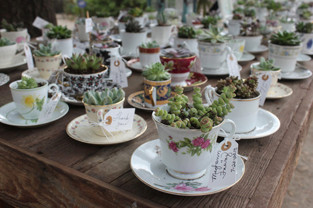 Wedding succulents in teacups with saucers   Confetti.co.uk