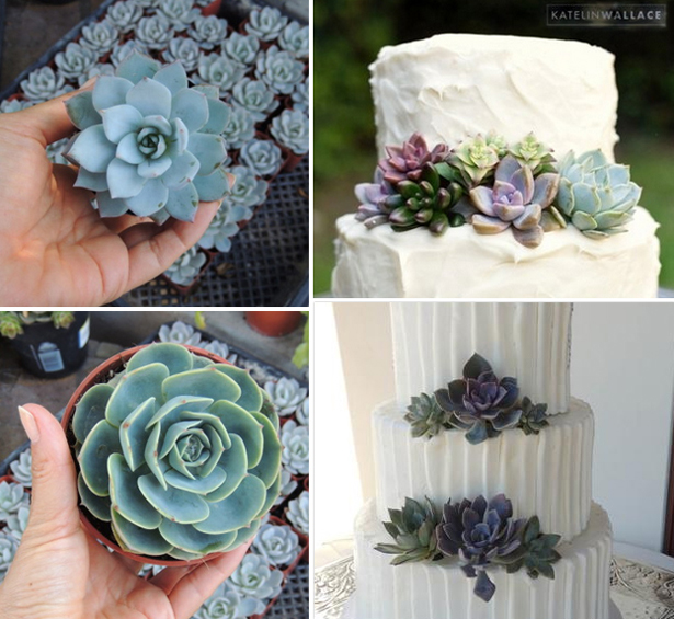 Trend Alert Wedding Succulents Confetticouk