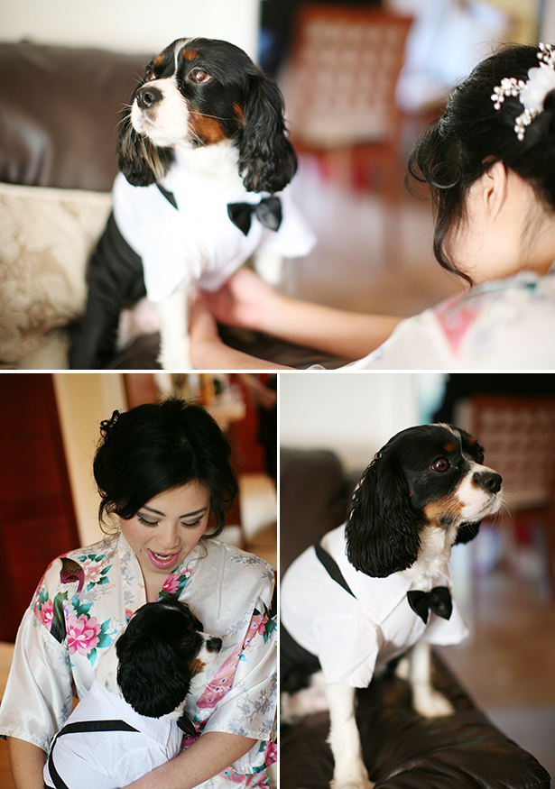 Brides pet dog in a bow tie | How to include your pet in your wedding | Sophie & Chris's real wedding | Confetti.co.uk