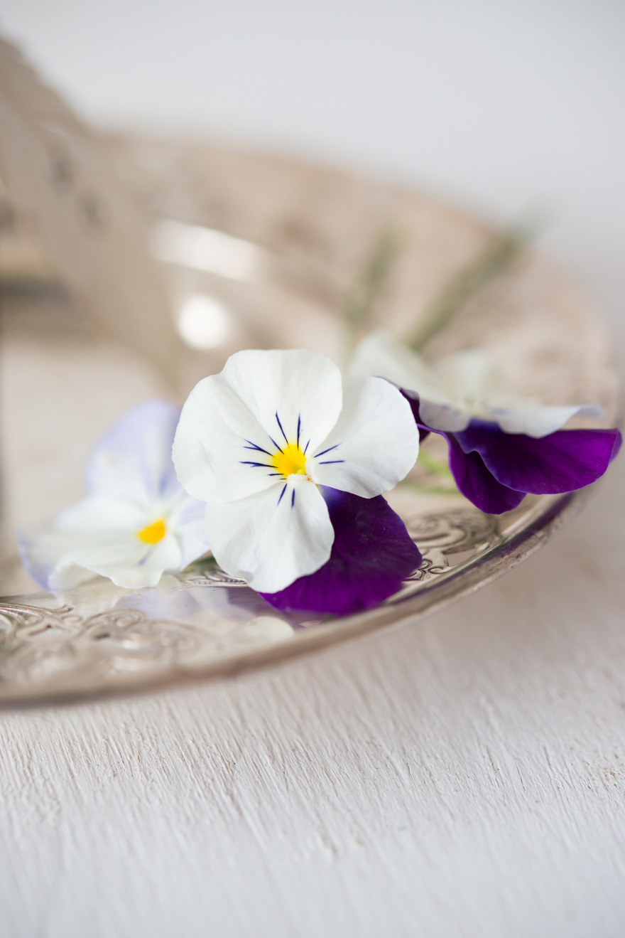 White and Purple Pansies   Confetti.co.uk
