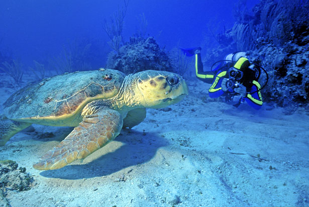 Get up close and personal with the wild life in the Caribbean | Confetti.co.uk