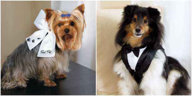 Wedding outfits for dogs   Confetti.co.uk
