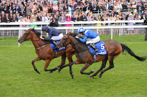2 Horses Racing at York Racecourse | Confetti.co.uk