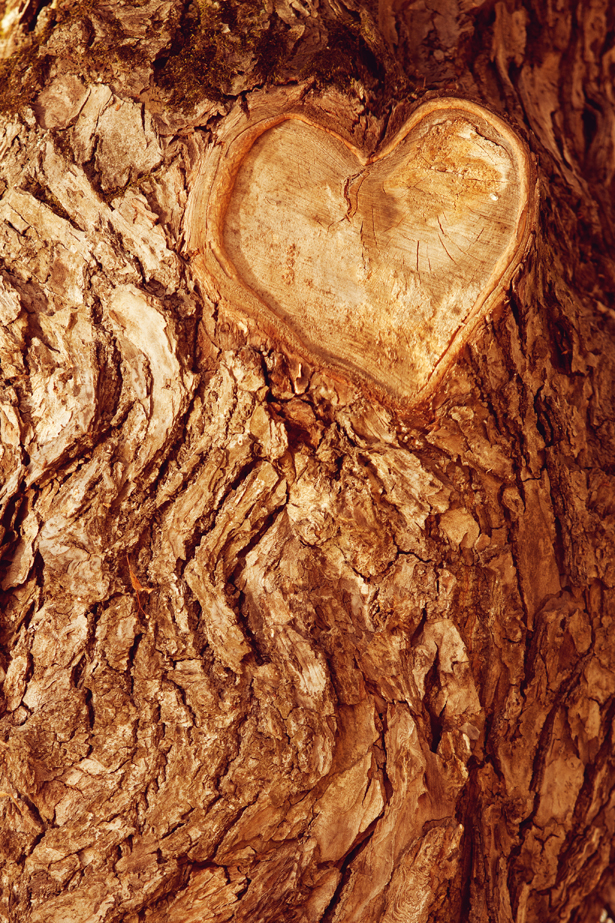 Forrest tree bark with heart engraved by Woodland Trust   Confetti.co.uk