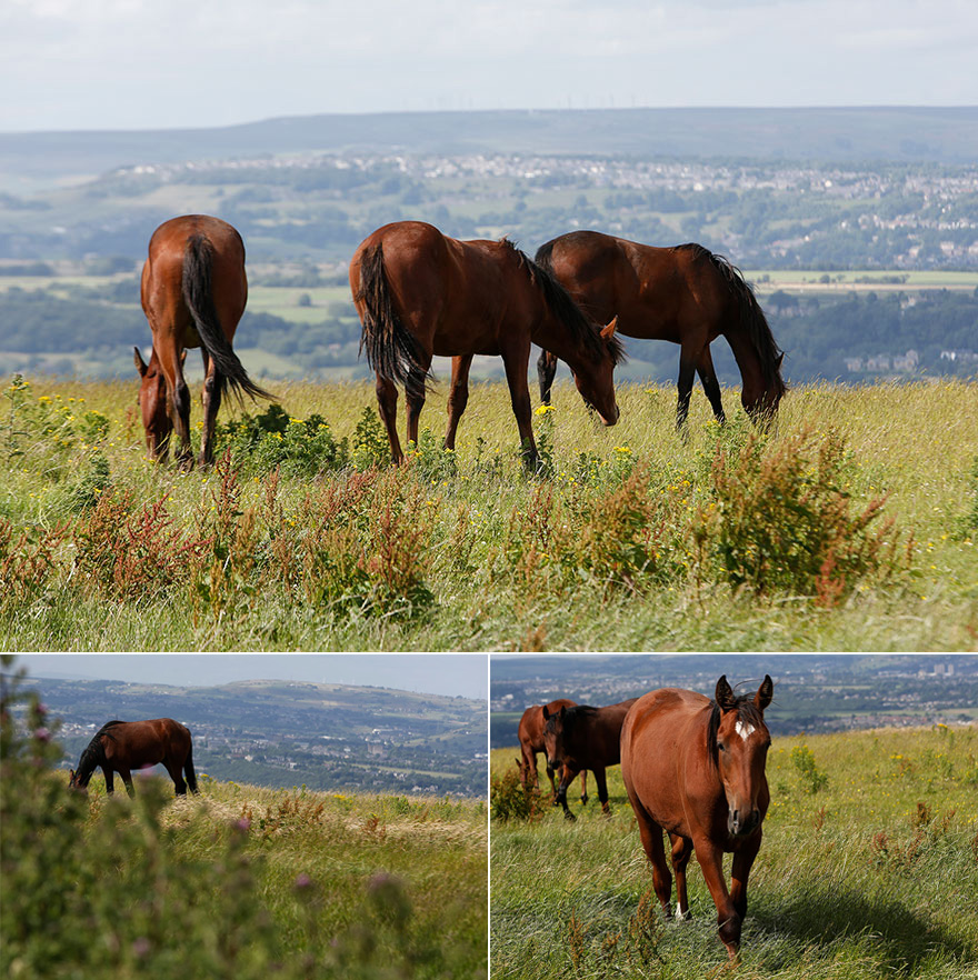 Pennine Manor Countryside Views and Bright Bay Horses | Confetti.co.uk